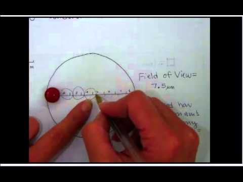how to look at a cell on a microscopw