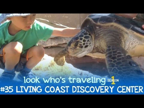 Living Coast Discovery Center: Look Who's Traveling
