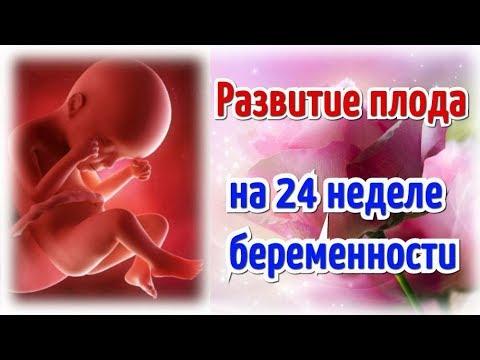 Развитие плода на 24 неделе беременности!