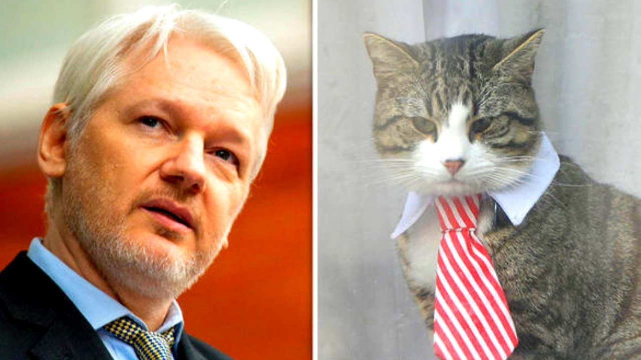 Warganet Mencemaskan Nasib Kucing Milik Pendiri WiliLeaks yang Ditangkap