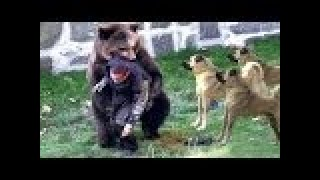 Extreme Trained & Disciplined KANGAL DOGS ►► Shepherd Dogs are Awesome - Best Viral Videos Ever