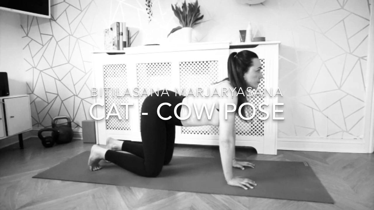 Cat-Cow Pose (Marjariasana-Bitilasana)