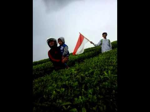 Kebun teh sidamanik