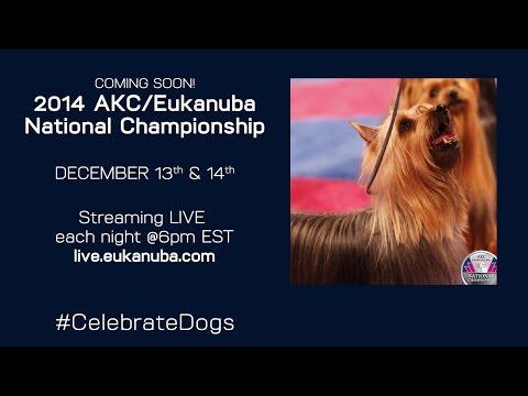 AKC/Eukanuba National Championship Day 2