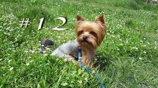 Как отучить собаку лаять.(Всем привет! С вами Йорик Вулкашка, и в этом видео я расскажу как можно отучить собаку лаять. Для желающих..., 2015-11-05T05:59:10.000Z)