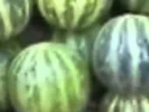Прикол Узбеки продают арбуз