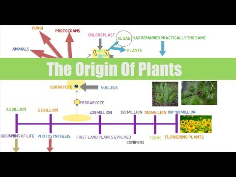 Lecture #2 Botany For Aquaponic Growers: The Origin Of Plants