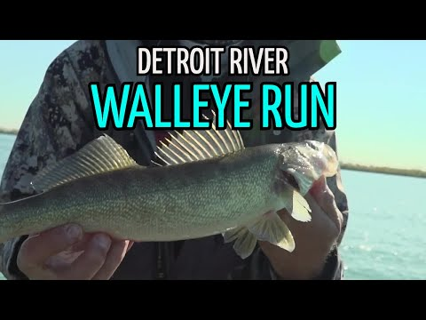 Postspawn Walleye Fishing On The Detroit River