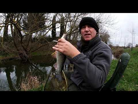 River Welland Chub