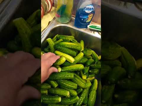 Worlds Best CRUNCHY SPICY Dill Pickles! How To Make - Tutorial