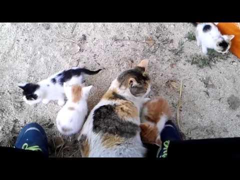 새끼 고양이가 와글와글