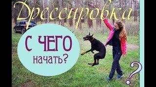 С ЧЕГО начать дрессировать собаку?! Первый этап дрессировки щенка или взрослой собаки.