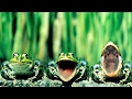 Звуки природы кваканье лягушек на пруду Лягушки квакают Nature Sounds Of Frogs Croaking In The Pond mp3