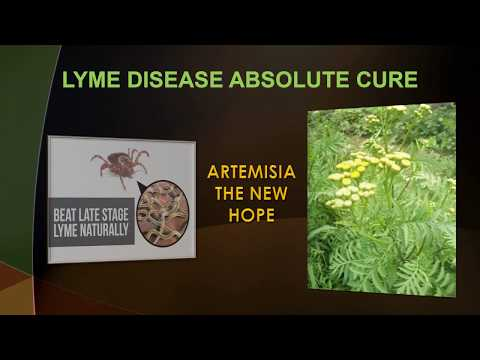 Lyme Disease - The Ultimate Cure