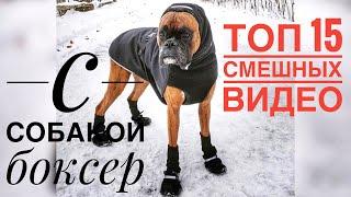 Смешная подборка ТОП 15 видео про собак боксер - Funny Boxer Dog Compilation NEW