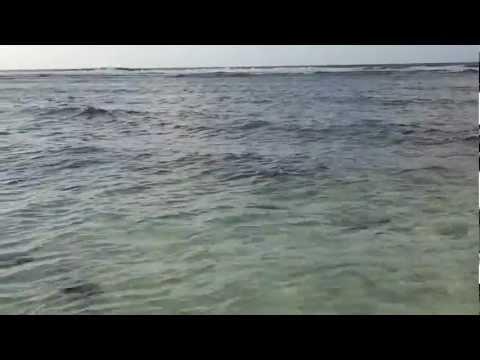 Guam Fishing- Skip Jack