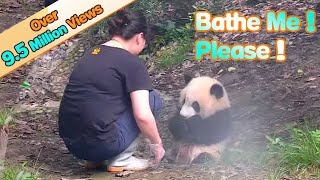 Panda asks nanny to bathe her