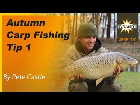 Carp Photos | Exclusive carp fishing in France with accommodation ...