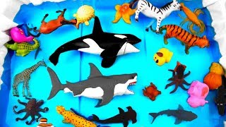 Learn Zoo Wild Animals Names Educational Toys Video For Kids Toddlers