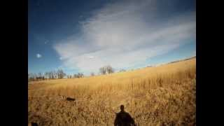 Blitz Pheasant Hunting Audio