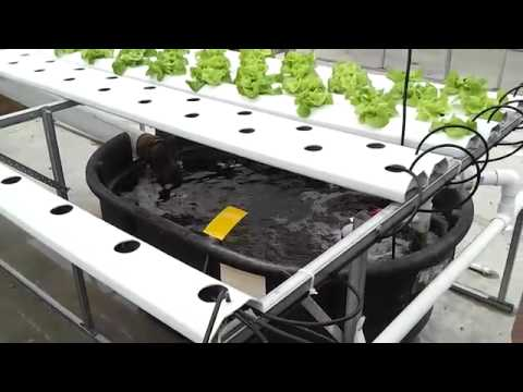 Greenway Hydroponics System, New Jersey