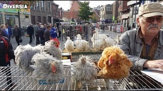 DIERENMARKT MOL BELGIË - LARGE ANIMAL MARKET IN BELGIUM