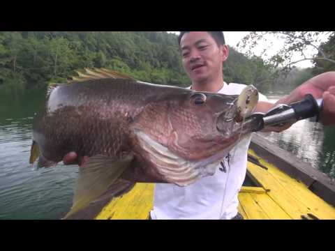 Papuan Black Bass Fishing part 2 with Gong Lei #12