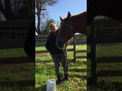 camelina oil for horses smart earth