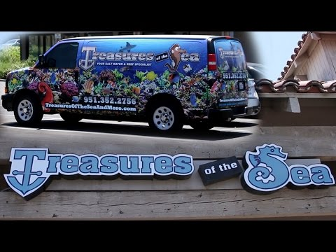 Tropical Fish Store Tours: Treasures of the Sea