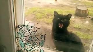 Коты приколы Домой хочу!