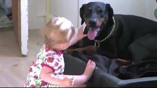 собаки и малыши: щенячьи нежности