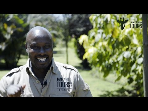Safari guide interview Moses