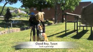 Tyson The Boxer I Obedience Training I By Valor K9 Academy