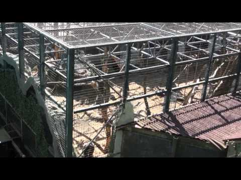 Safari Skyway (Monorail POV) Chessington World of Adventures