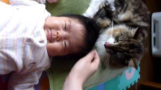 猫が赤ちゃんの頭を毛づくろい