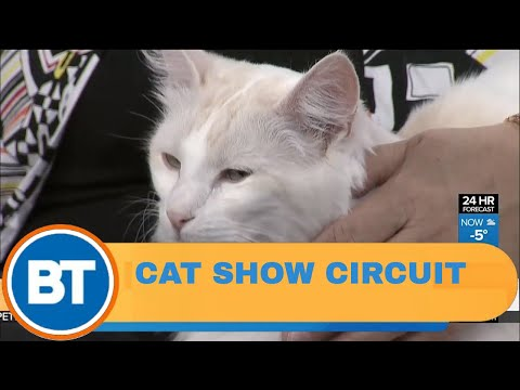 An inside look at 'Catwalk: Tales from the Cat Show Circuit'