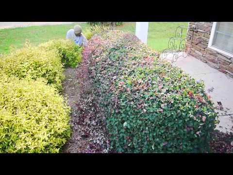 Learn How To Trim Your Shrubs and Hedges Professionally