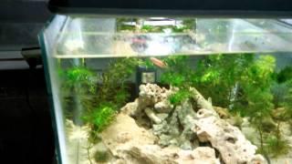 Updated Freshwater Nano Fish Tank W/ Diy Ligthing!
