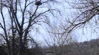 decorah eagles nest 3 18 2010