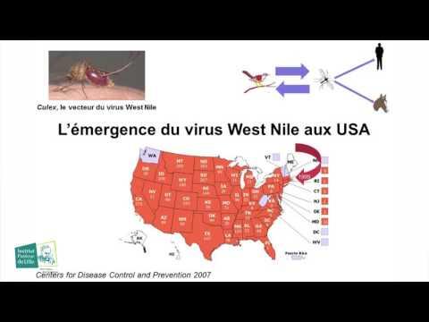5 à 7: Les maladies infectieuses émergentes