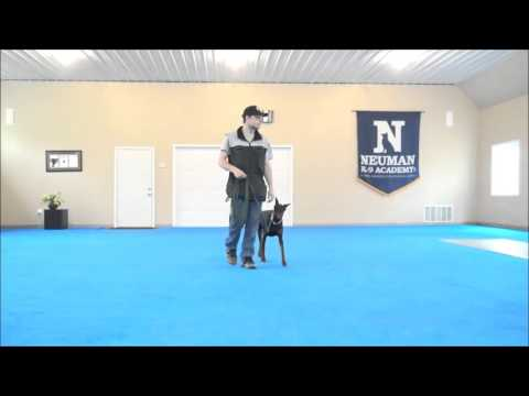 Daphny (Doberman Pinscher) Dog Boot Camp Demonstration