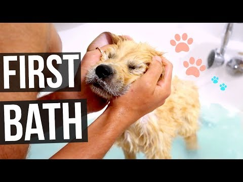 PUPPIES FIRST BATHTIME!