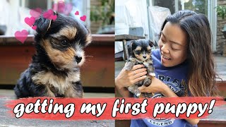 Getting My First Puppy! (Morkie)