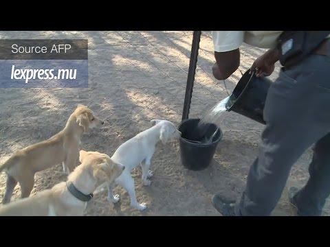 Gaza: les chiens errants ont désormais un refuge