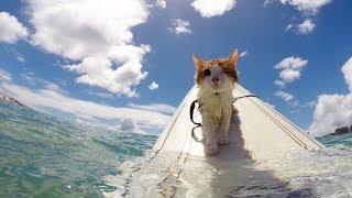 Смешные коты, кошки и другие животные (funny cats 2019) – ВОСПРЕЩЕНО ТОСКОВАТЬ, ПО НАСТОЯЩЕМУ СМЕШНО