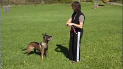 Heat Stroke - It Can Kill Your Dog!