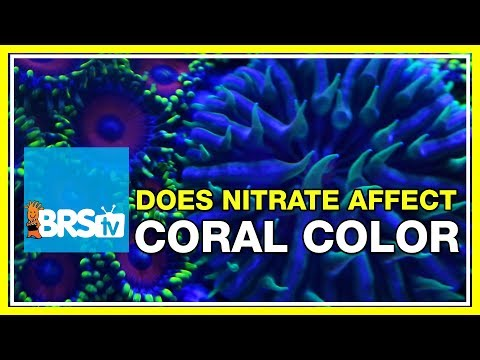 FAQ #33: How do nitrates affect coral coloration in the reef aquarium?