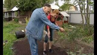 видео как посадить газонную траву на даче
