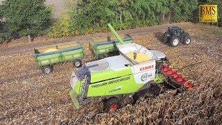 Körnermais ernten - Mähdrescher Lexion Claas 670 TERRA TRAC - combine harvester corn harvest 2018