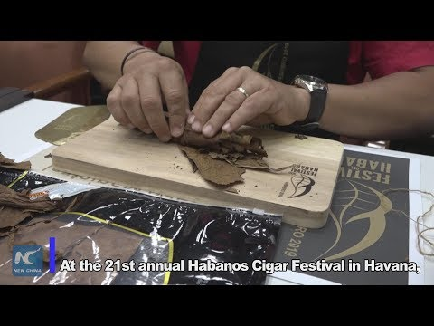 How to roll a premium Cuban cigar